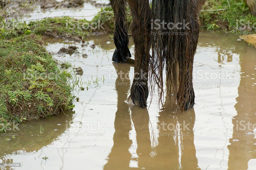Standing water royalty-free stock photo