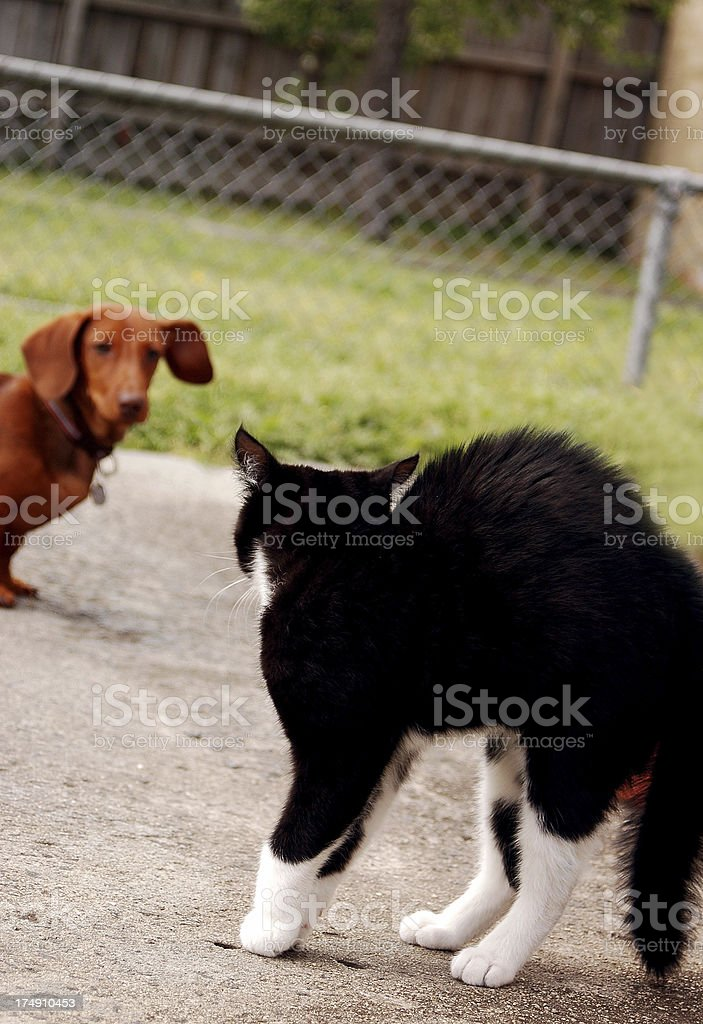 stand-off! royalty-free stock photo