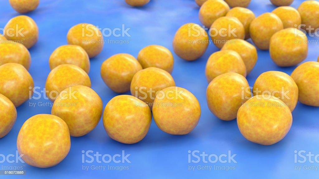 Staphylococcus Aureus (MRSA) stock photo