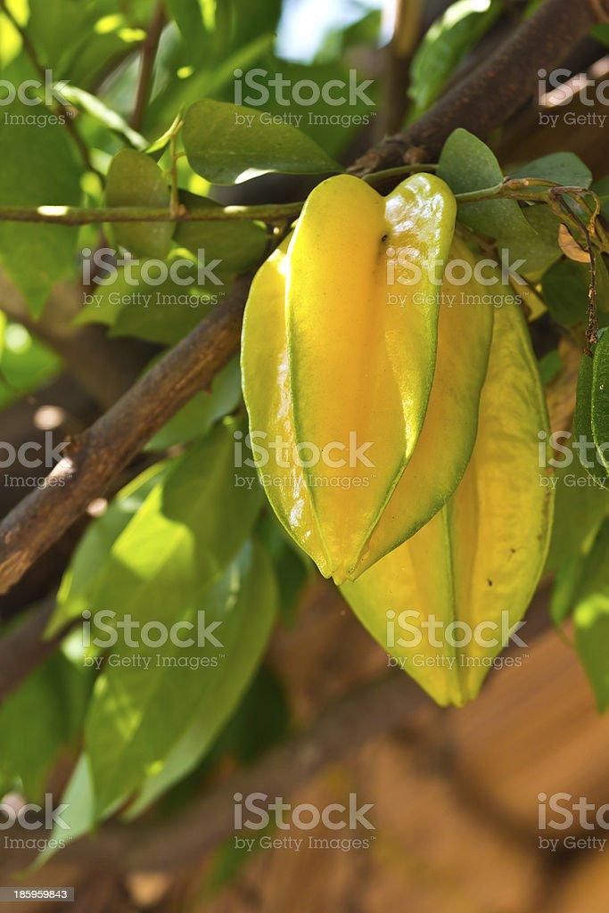 Star apple fruit royalty-free stock photo