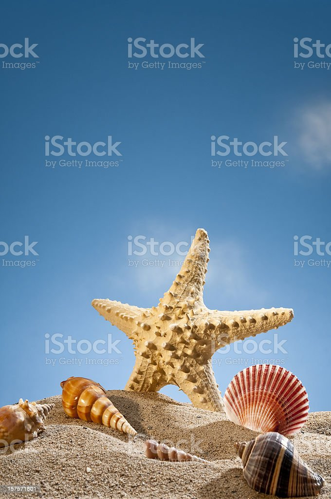 Star Fish And Sea Shells On The Sand royalty-free stock photo