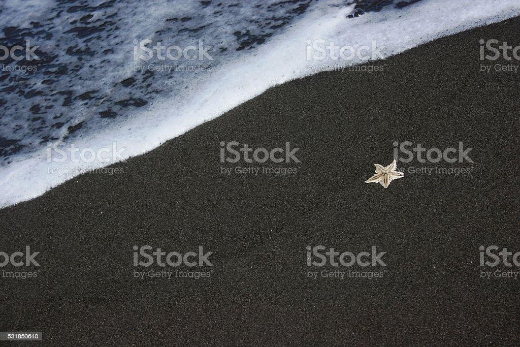 star fish at Bugel beach atmosphere stock photo