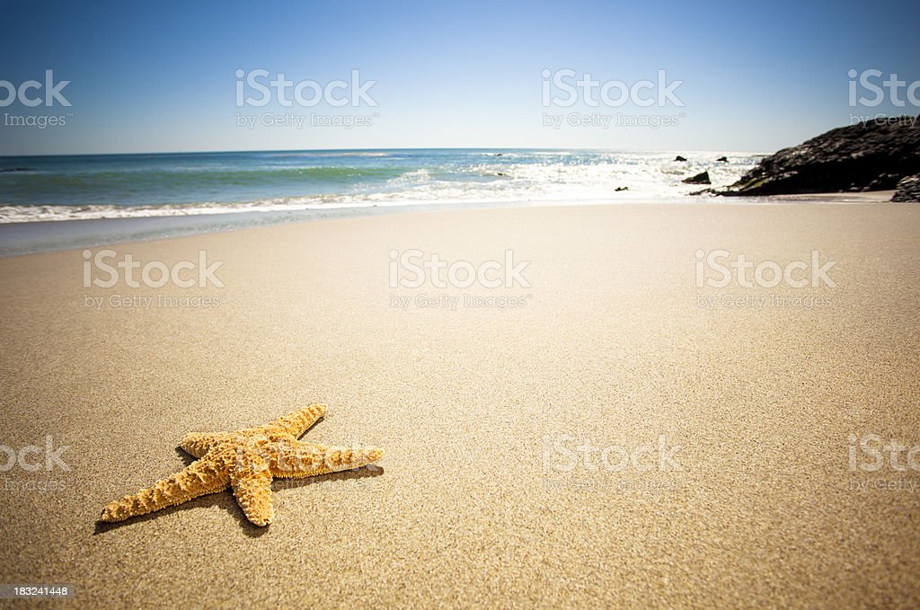 Star Fish Beach royalty-free stock photo
