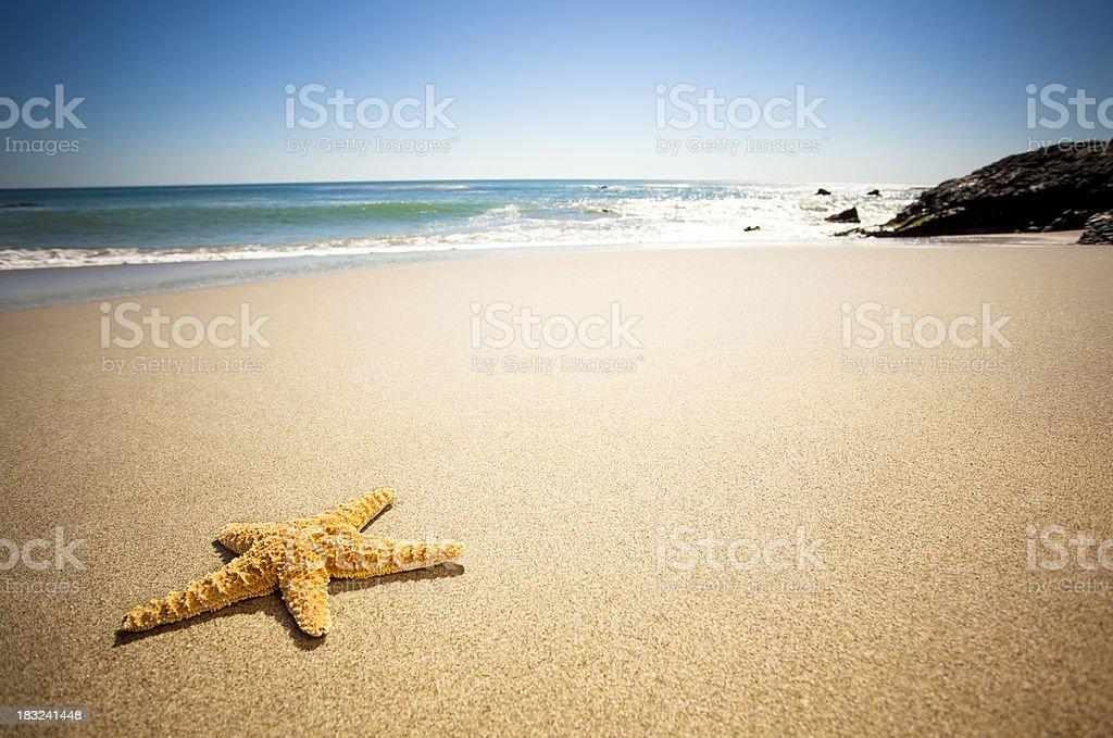 Star Fish Beach stock photo