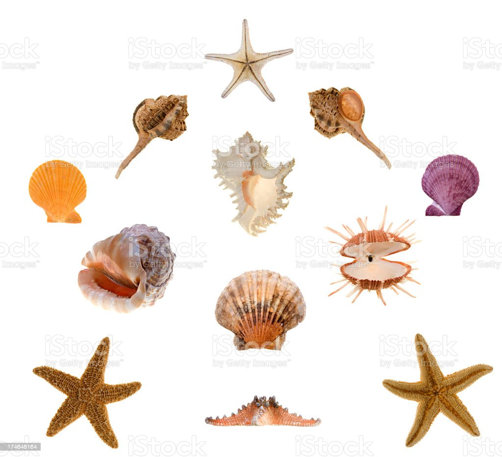 Star Fish, Echinoderm Clams and Sea Life stock photo