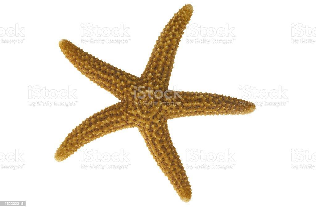 Star fish on white background stock photo