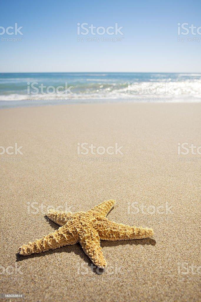 Star Fish stock photo
