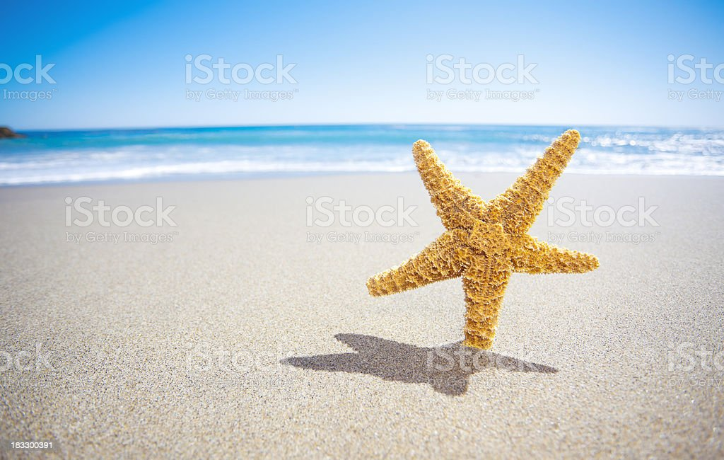 Star Fish royalty-free stock photo