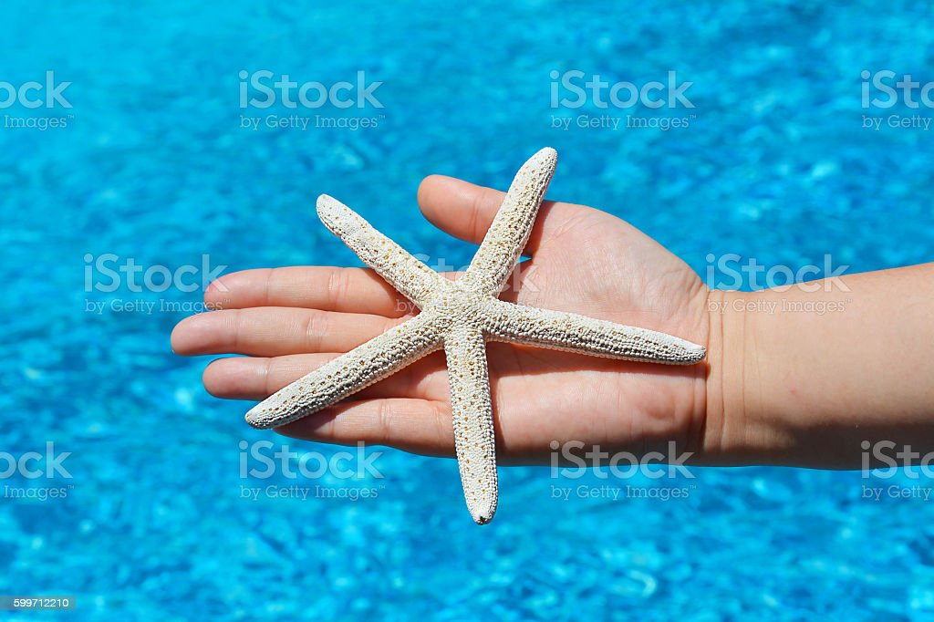 Star fish stock photo