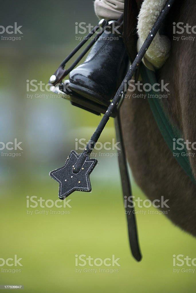 Star horsewhip stock photo