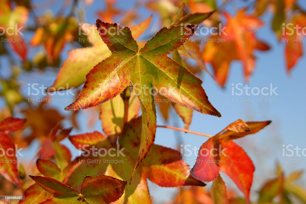 Star of the Fall Show royalty-free stock photo