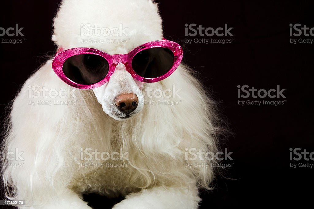 Star Poodle Next to Copy Space - On Black royalty-free stock photo
