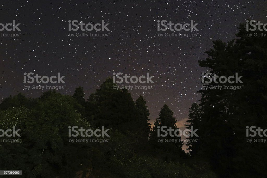 Star Trail on pinetree. Color Image stock photo