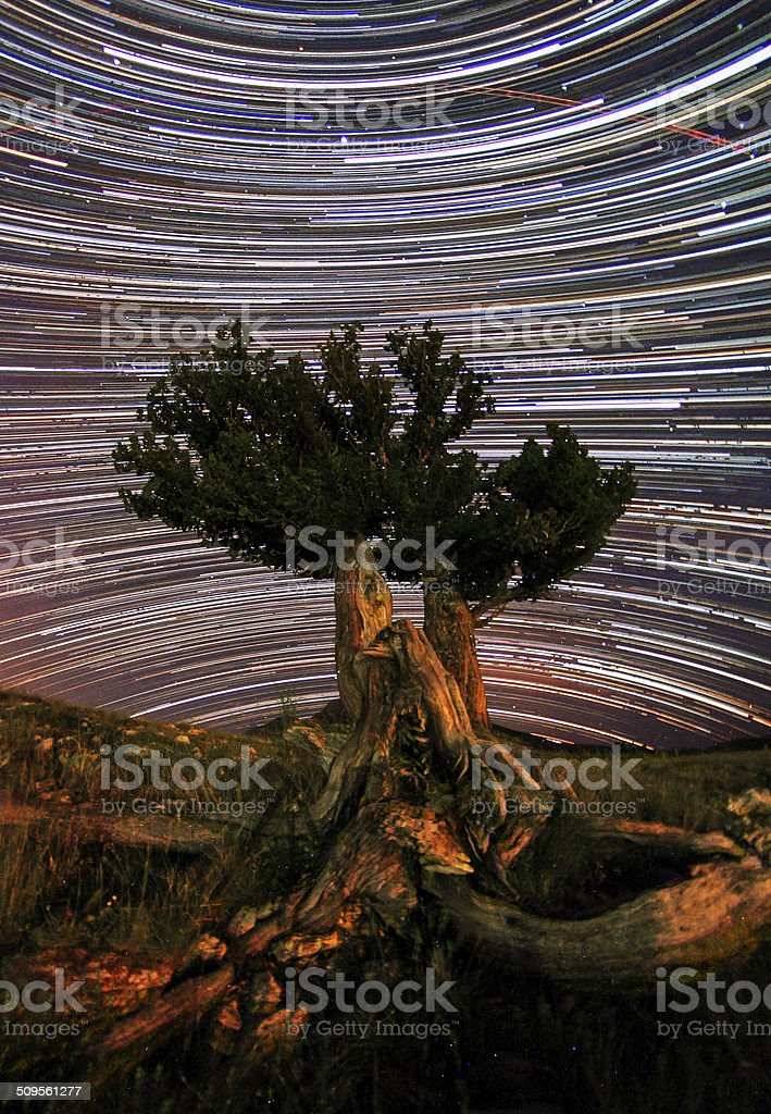Star trails and the juniper tree royalty-free stock photo