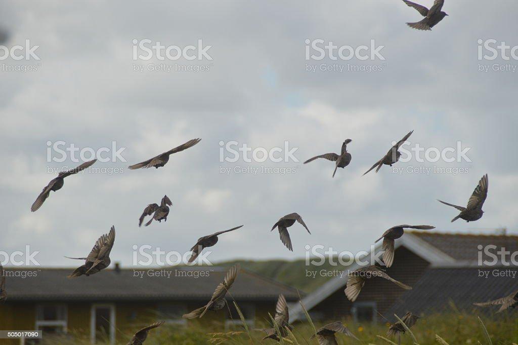 Stare im Flug stock photo