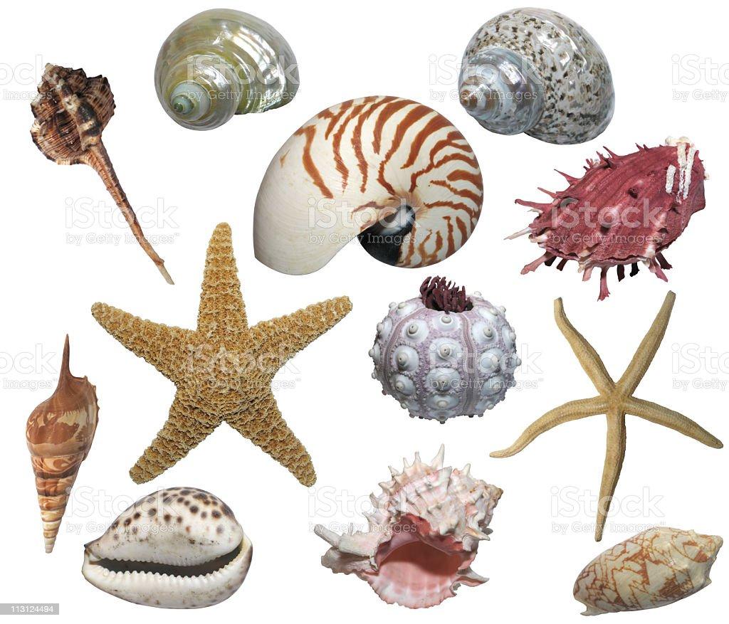 Starfish & Sea Design Elements (Isolated) royalty-free stock photo