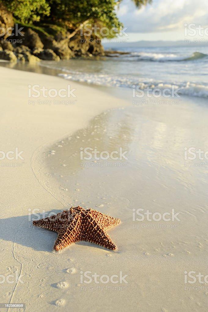 Starfish and beach royalty-free stock photo