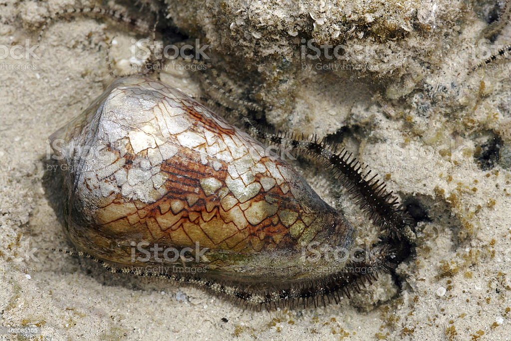 starfish and cone snail stock photo