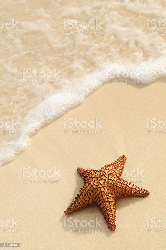 Starfish and ocean wave royalty-free stock photo