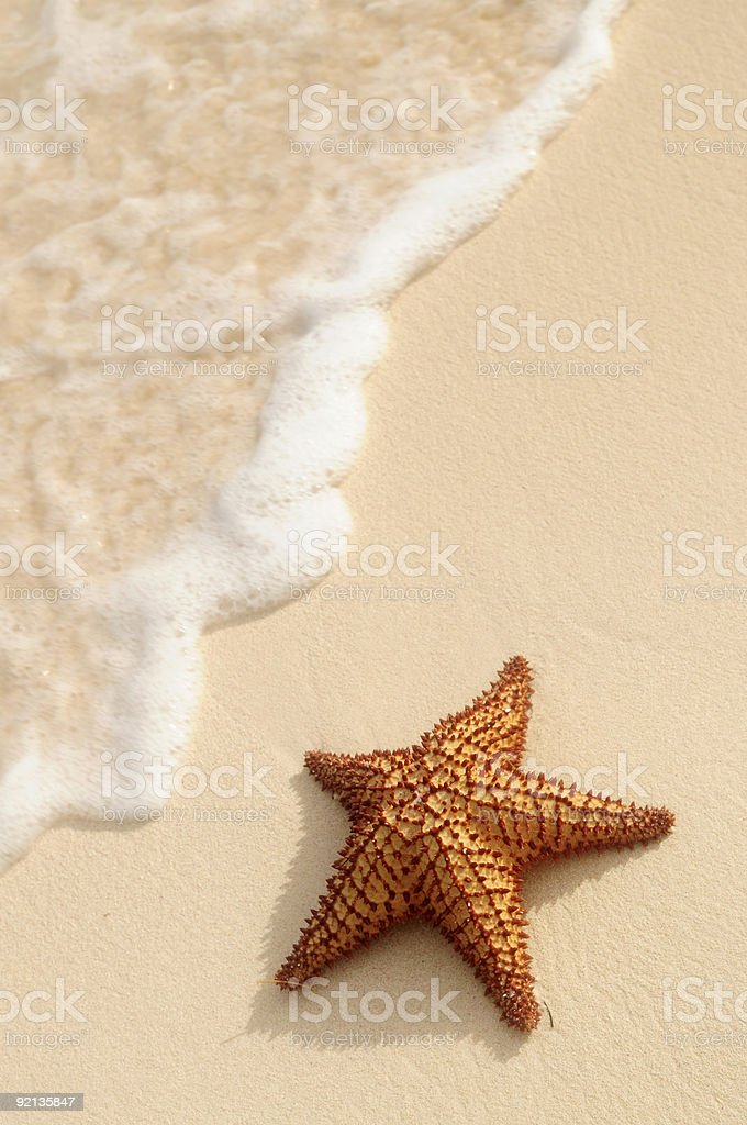 Starfish and ocean wave stock photo