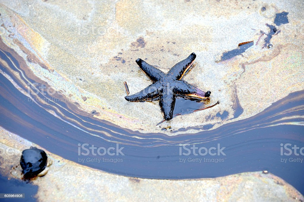 Starfish and oilspill stock photo