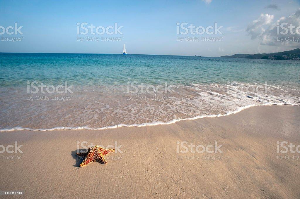 starfish and sail boat panoramic stock photo