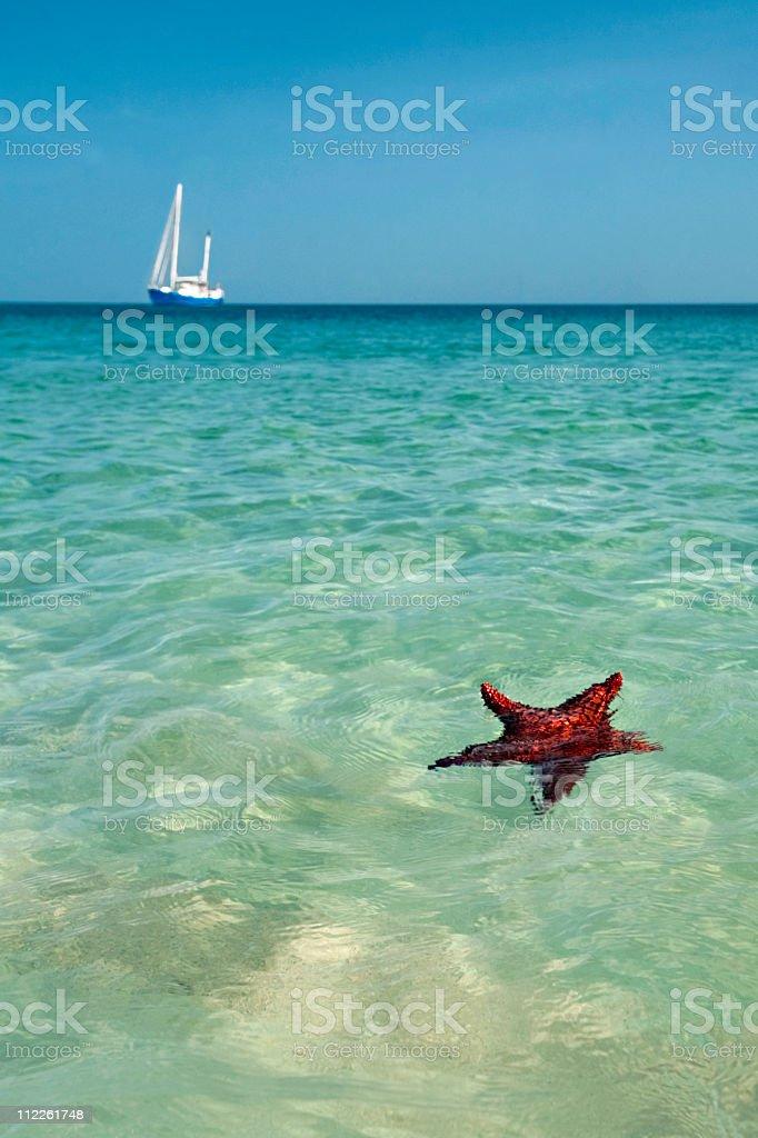 starfish and sail boat stock photo
