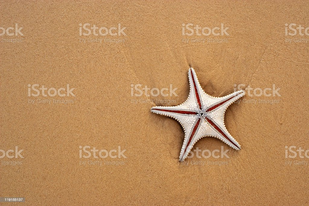 Starfish and sand royalty-free stock photo