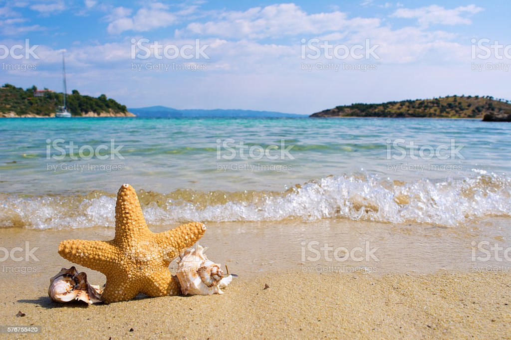 Starfish and seashell on the beach stock photo
