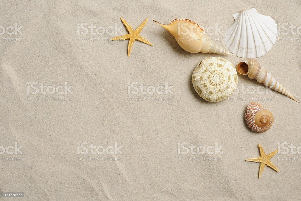 Starfish and seashells on sandy beach with copy space stock photo