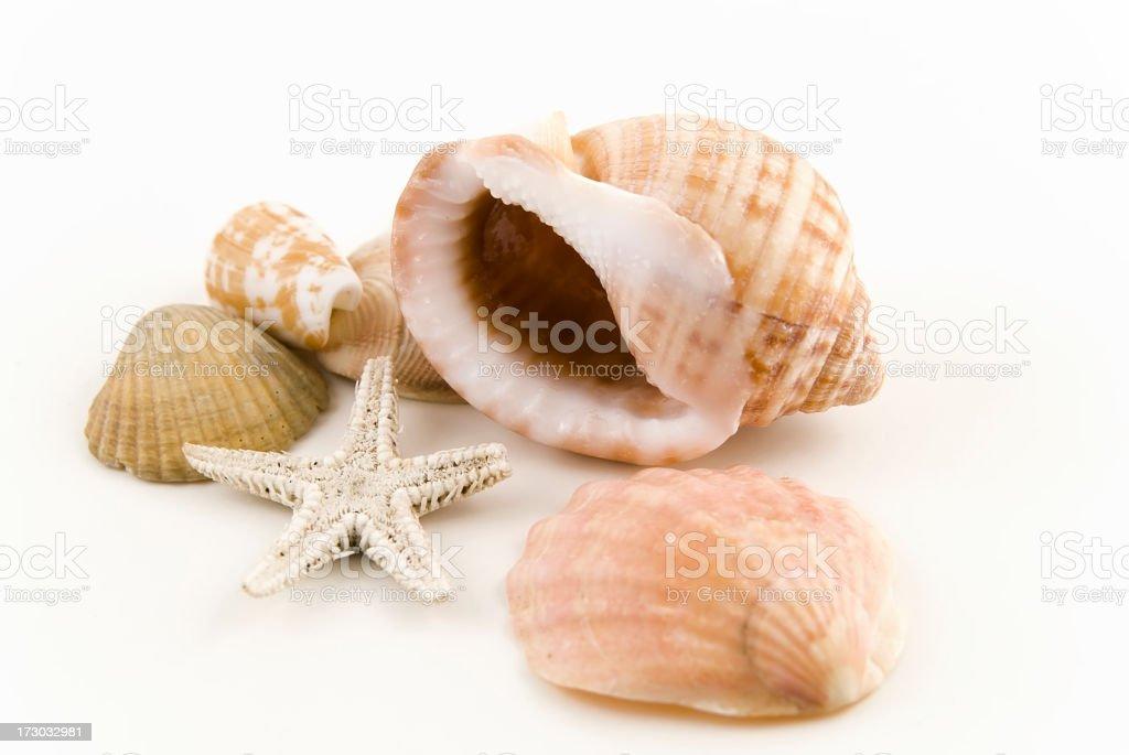 starfish and  shell royalty-free stock photo