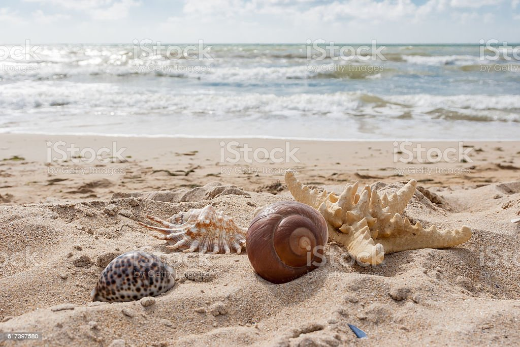 Starfish and shells lie in the sand stock photo