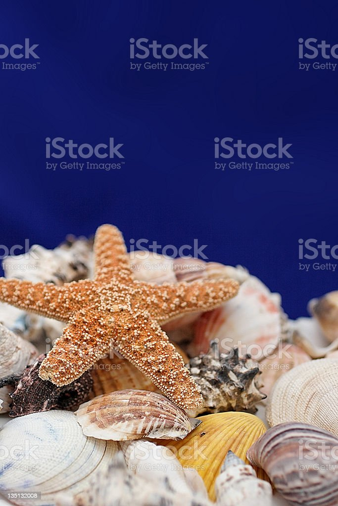 starfish and shells royalty-free stock photo