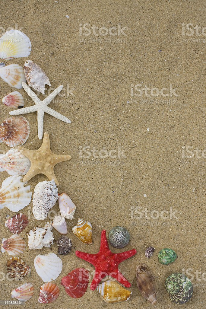 Starfish and Shells stock photo