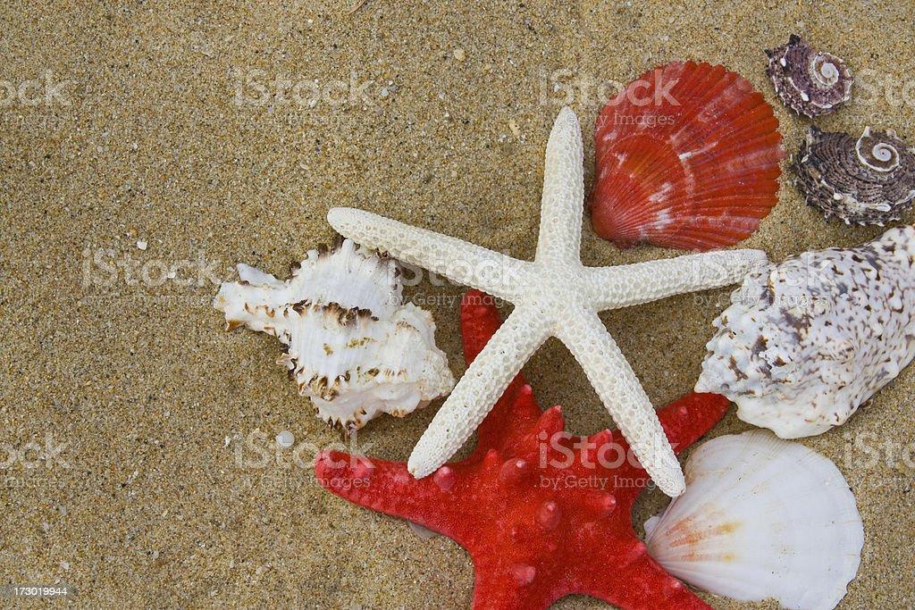 Starfish and Shells royalty-free stock photo