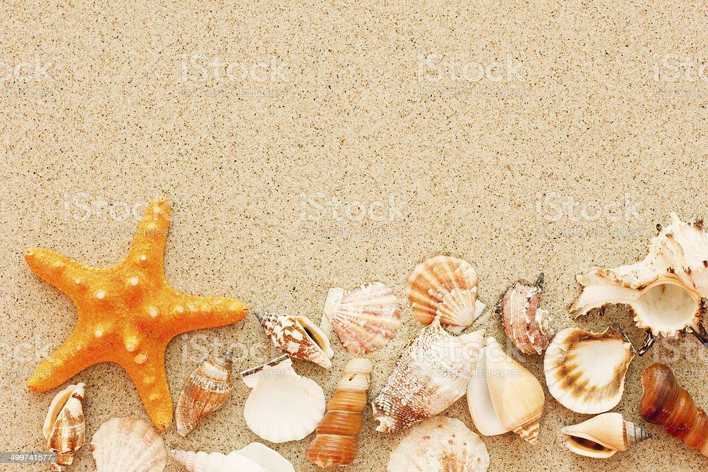 Starfish And Shells. stock photo