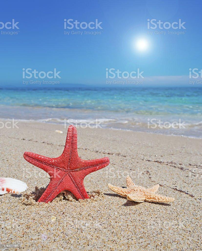 starfish and sun royalty-free stock photo