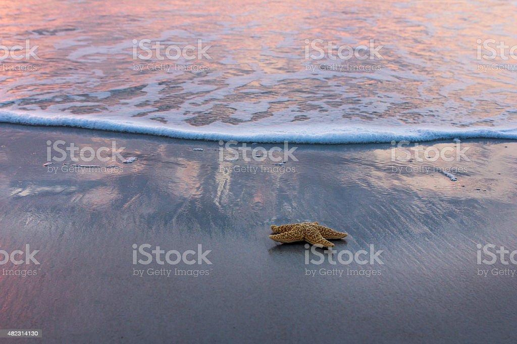 Starfish and Sunrise stock photo
