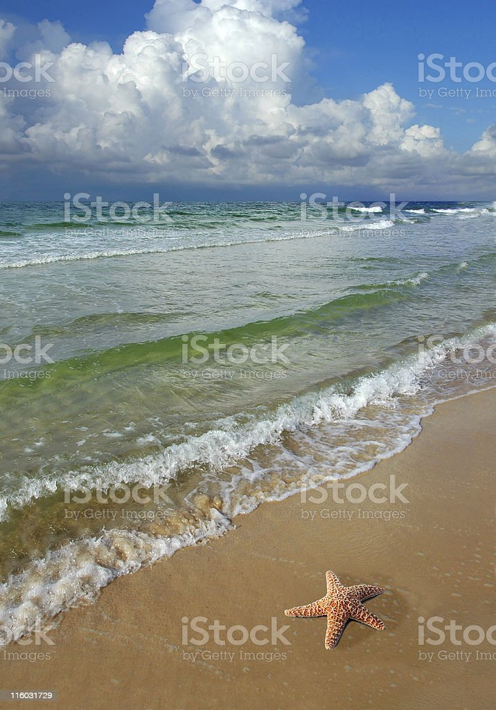 Starfish and the Beach royalty-free stock photo