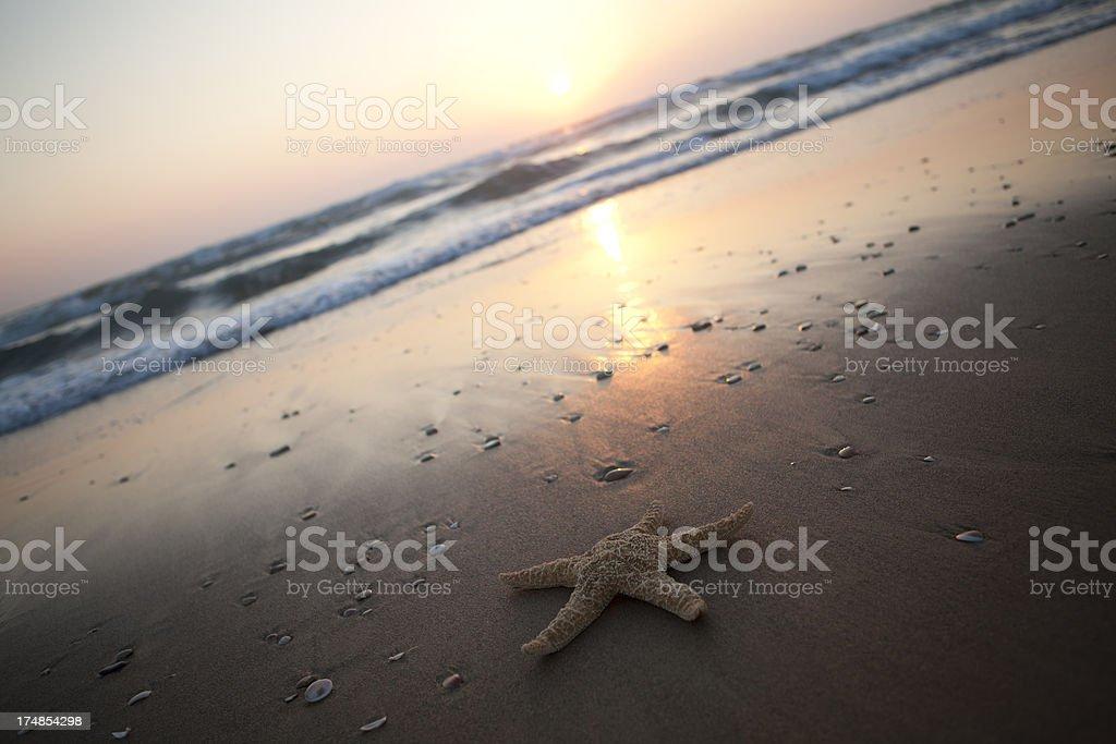 Starfish At Sunset royalty-free stock photo