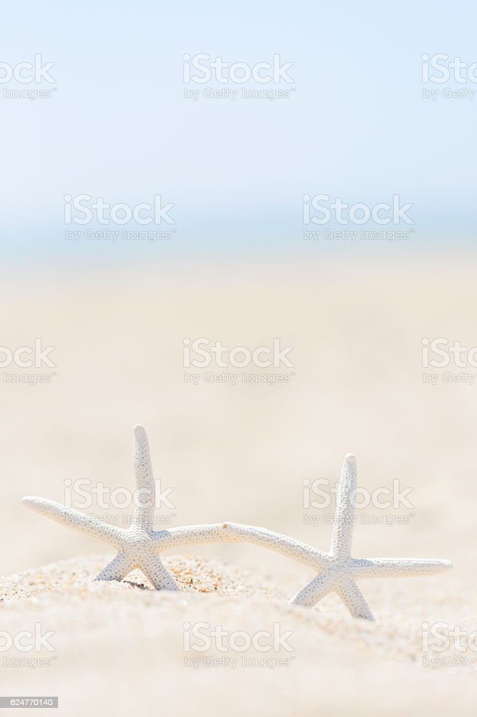 starfish at the beach stock photo