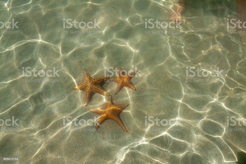 Starfish at the Starfishbeach bocas del toro stock photo
