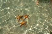 Starfish at the Starfishbeach bocas del toro