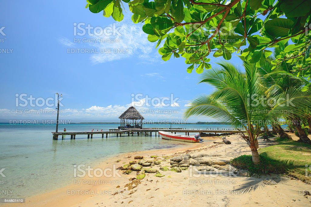Starfish beach stock photo