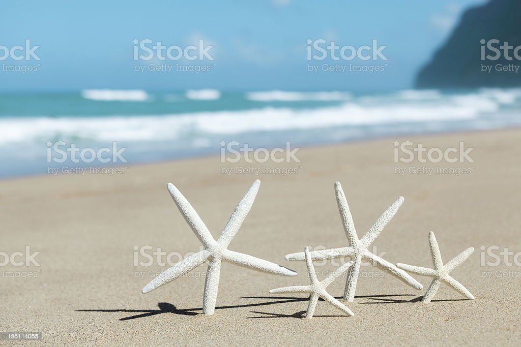 Starfish Family Vacation in Kauai Hawaii royalty-free stock photo