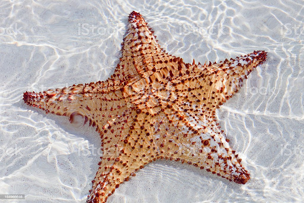 Starfish in clear waters stock photo