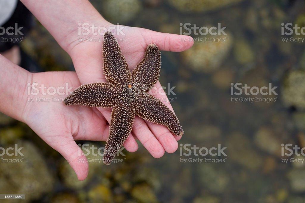 Starfish in his hand stock photo