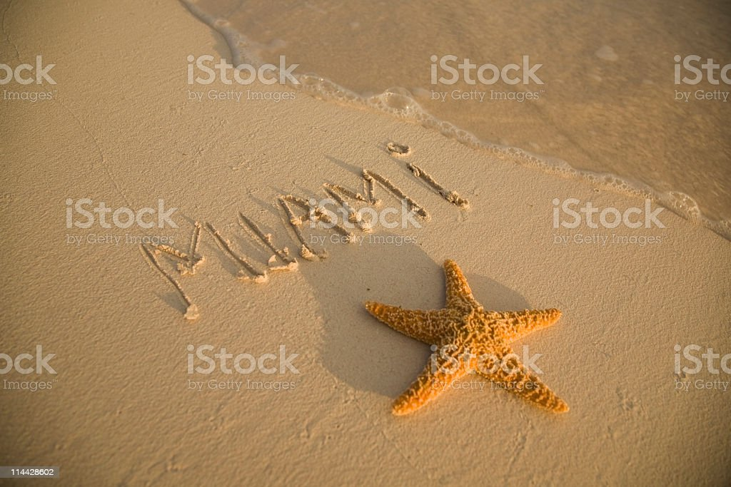 starfish in Miami Beach royalty-free stock photo