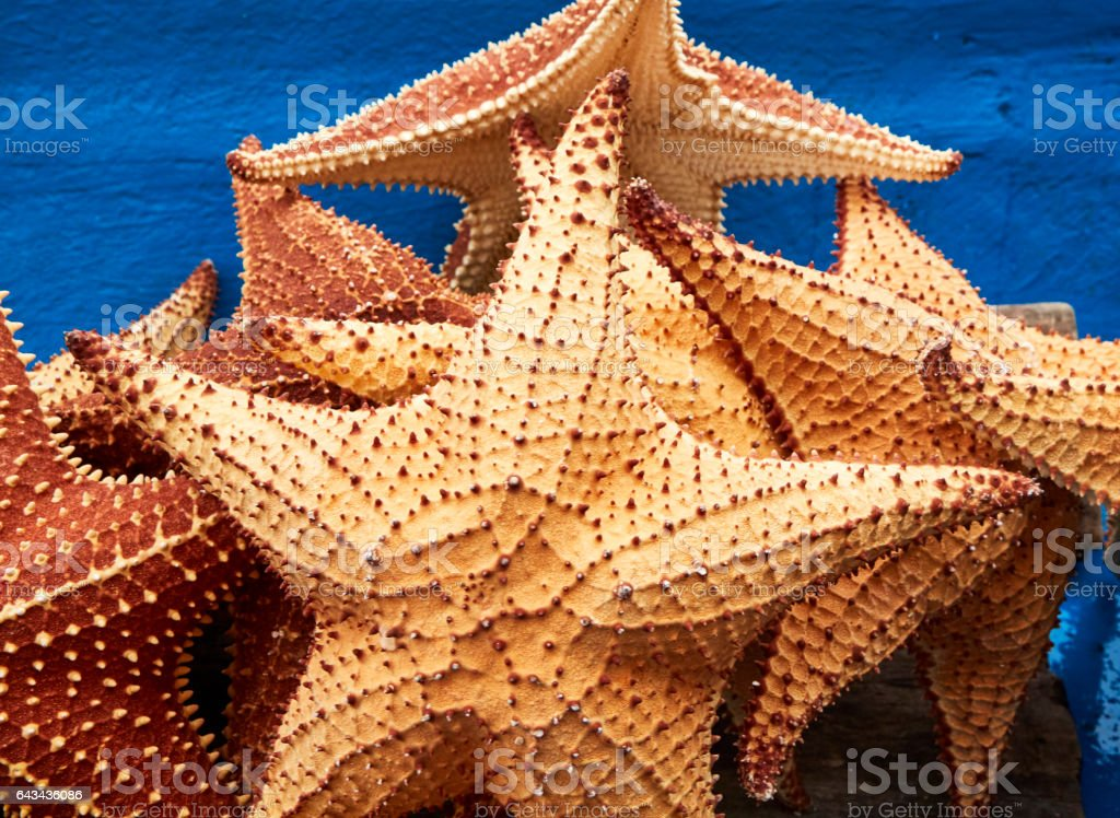 Starfish in Ponga Boat stock photo