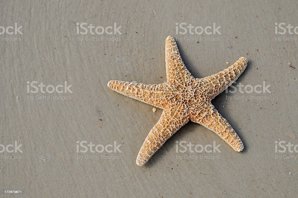 Starfish in Sand royalty-free stock photo